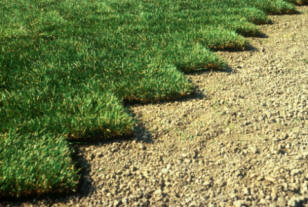 Turfgrass sod installation (10)
