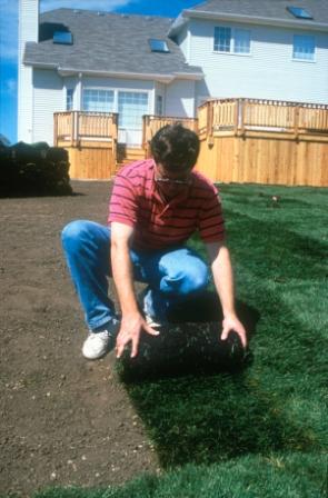 Turfgrass sod installation (16)